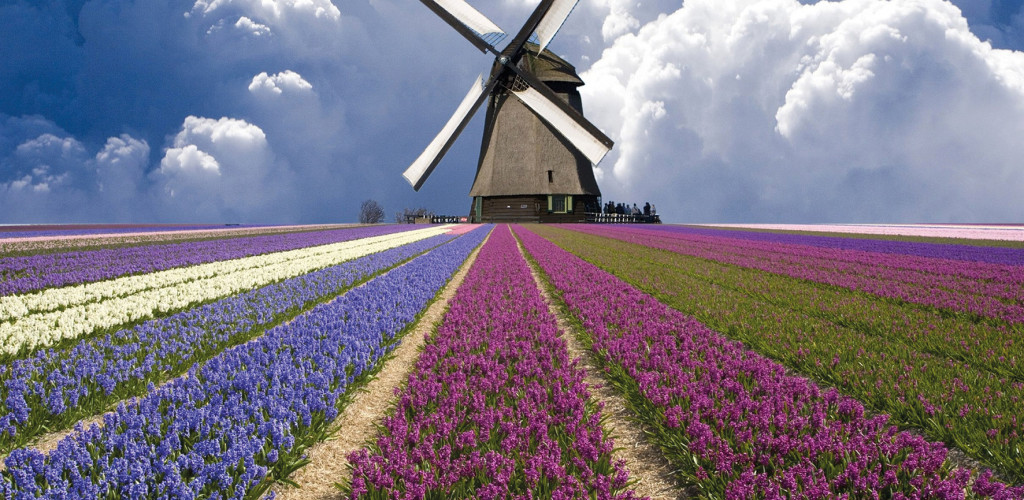 Olanda, tra i tulipani in fiore